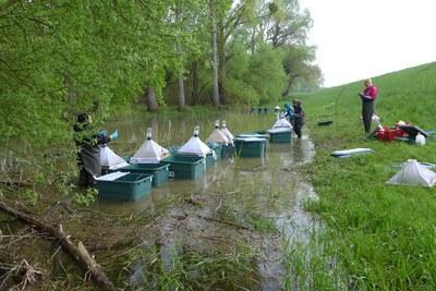 Freilanduntersuchung in den Überschwemmungsflächen am Rhein. Foto: Carsten Brühl