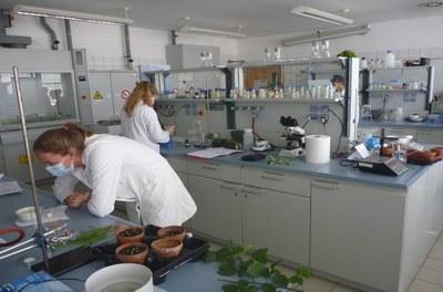 Studierende stellen im Labor Extrakte verschiedener Pflanzenarten zur Analyse des Pigmentgehalts her