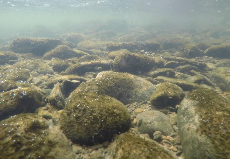 Gewässerökologen schlagen Alarm: Der Klimawandel schädigt unsere Gewässer