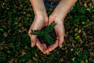 Durch nachhaltiges Handeln schützt die Universität die Umwelt. Foto: Unsplash.com