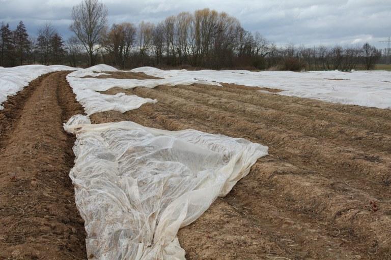 """Plastikfolien in der Landwirtschaft: Presse berichtet über """"PLAST"""""""