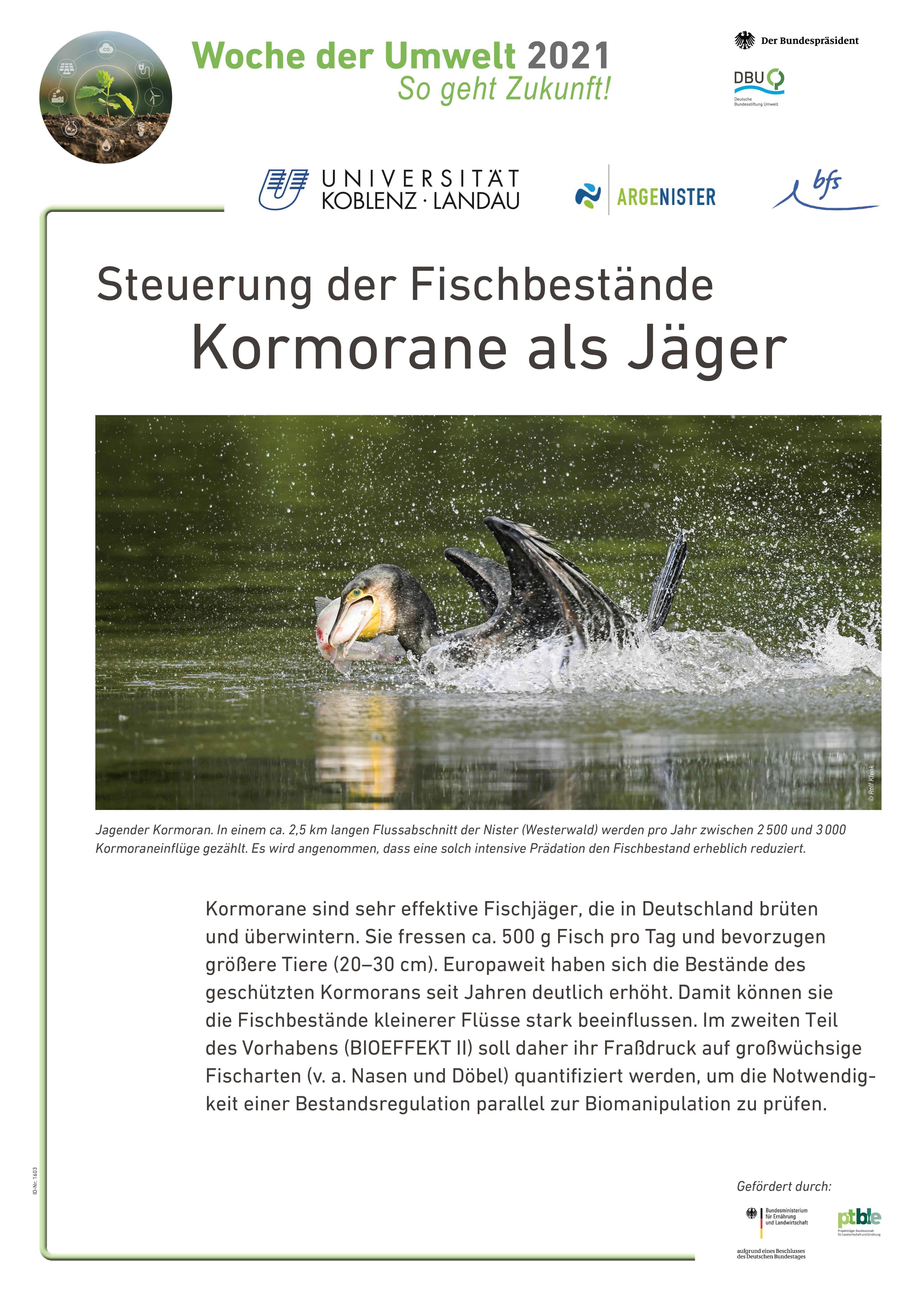 Der Kormoran als JägerSteuerung der Fischbestände (Biomanipulation)