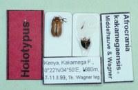 Afrocrania kakamegaensis T