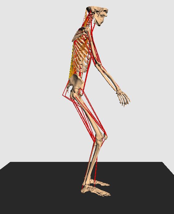 Modell Skelett Seite