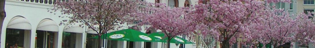 IFB Banner 01