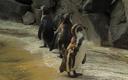 Studentische Forschung: Wie kann man Pinguine vor Stellnetzen der Fischerei warnen