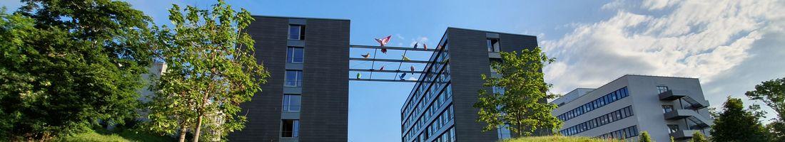 Gebäude I und K mit Vögeln