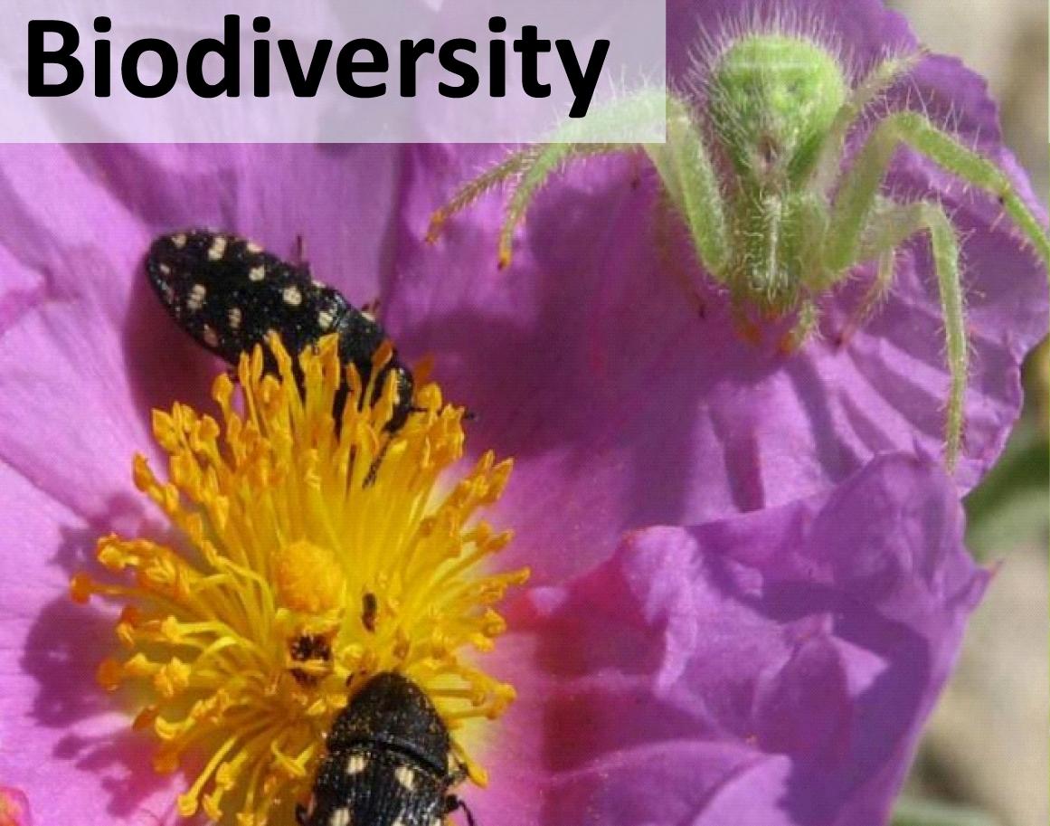 Grafik_Startseite_Biodiversity.jpg