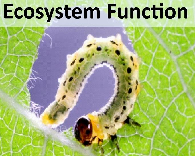 Grafik_Startseite_Ecosystem.jpg