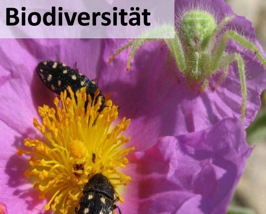 Grafik_Startseite_Biodiversität.jpg