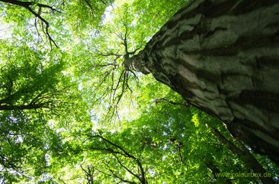 Symbolisch für Perspektiven nach dem Studiengang wird ein Wald abgebildet in der Blickrichtung von unten nach oben zu den Baumwipfeln und dem Himmel.