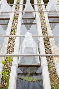 Blick auf die Freiland-Fließgewässeranlage am Campus Landau