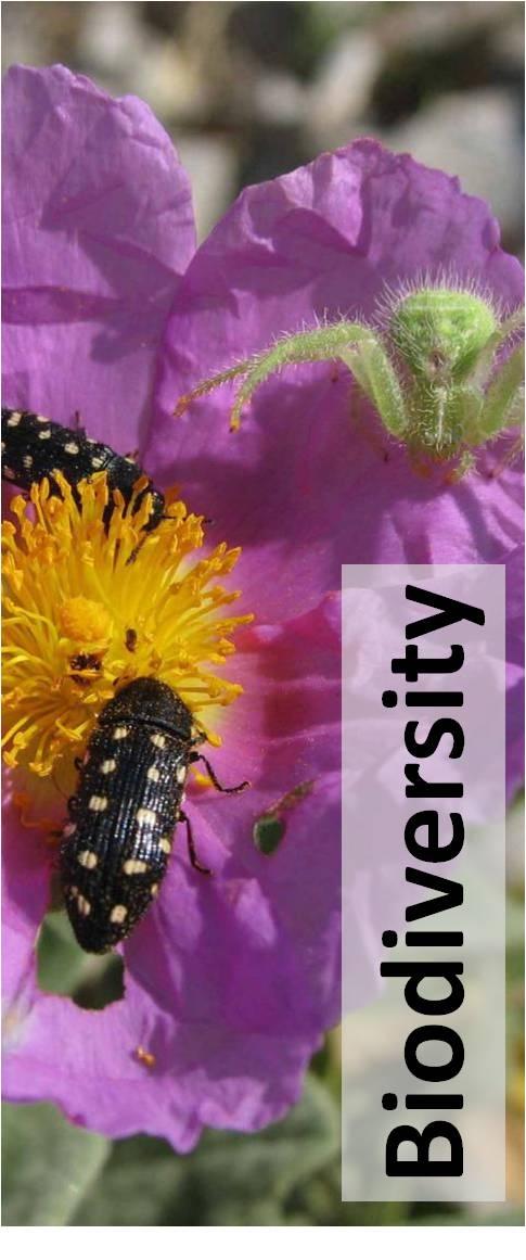 biodiversity coursework