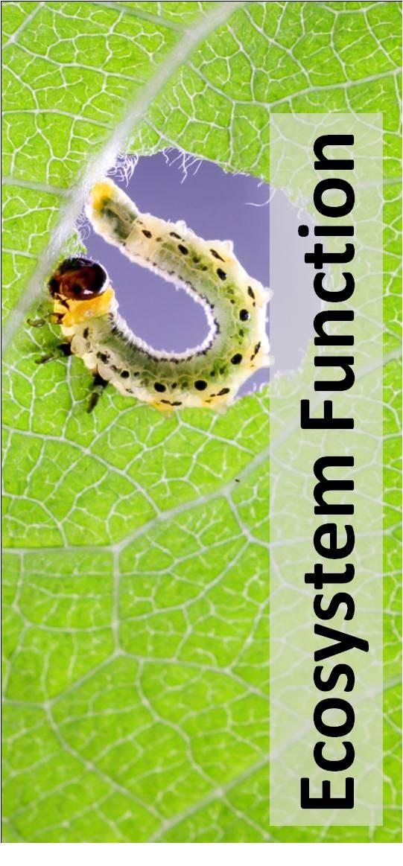 Ecosystem Function-1.jpg