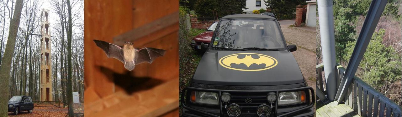 aren bats header 2