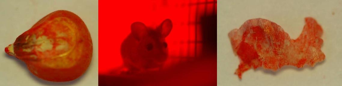 Header-Wood mouse
