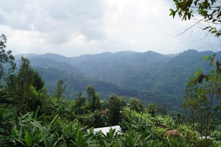 Cyamudongo Hills