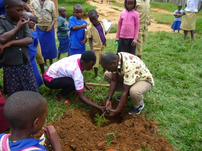 Planting trees on school grounds