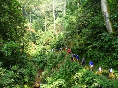 Guided walk through Cyamudongo forest