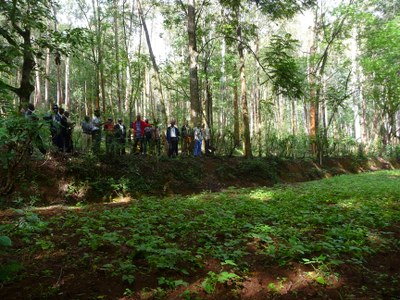 Agroforestry research plots