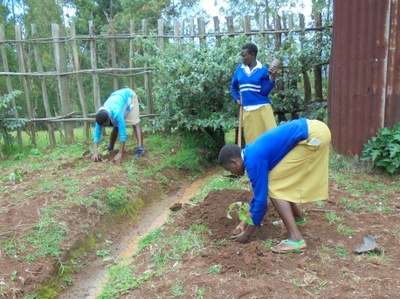 Planting trees on school ground
